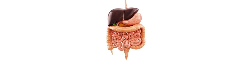Apparato Gastro-enterico