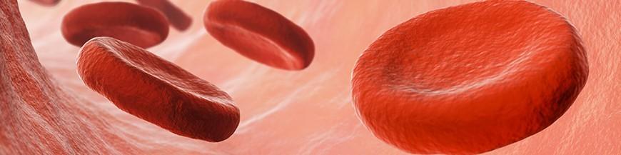 Circolazione e Colesterolo